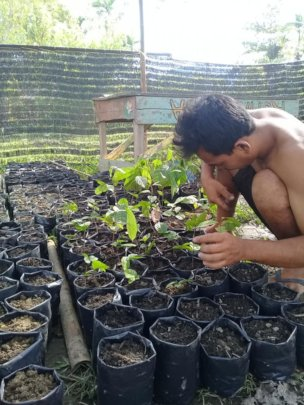Fruit tree nursery. Photo courtesy of Darma Pinem