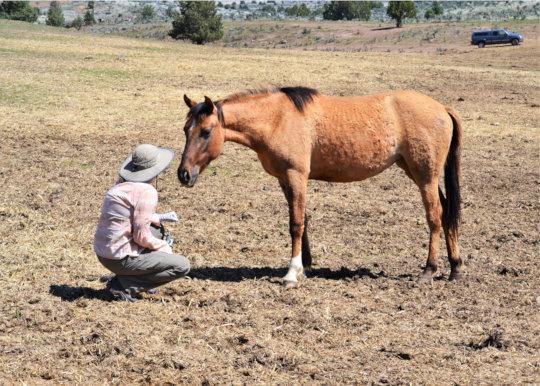 RTF Biologist Celeste chats with Gila herd member