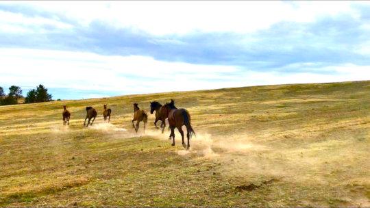 Newly arrived Gilas explore Black Hills Sanctuary