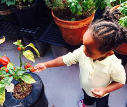 child with a growing pepper!