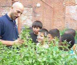 School Yard Garden in Inner City DC