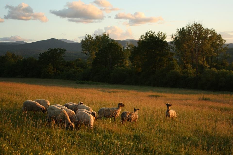 Support a Peace Farm in Bosnia and Herzegovina