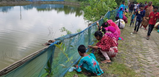 Mangrove plantation by children