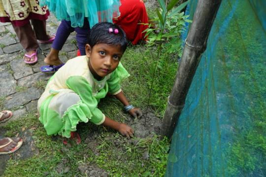 Mangrove plantation activity