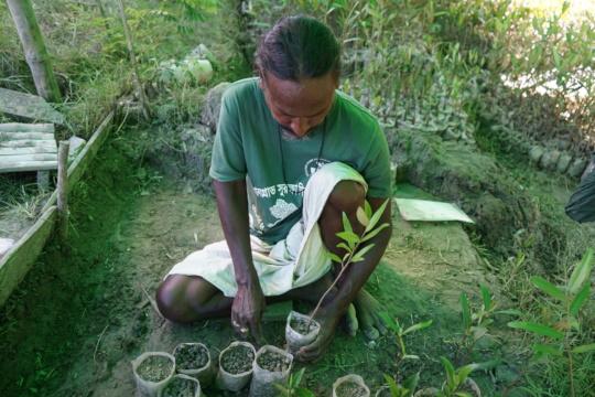 Mangrove saplings give us money