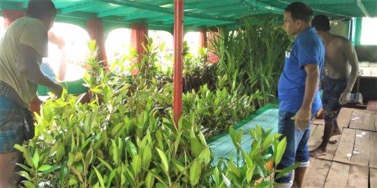 Selling mangrove saplings