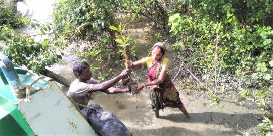 Women earn 2000 euro from mangrove nursery