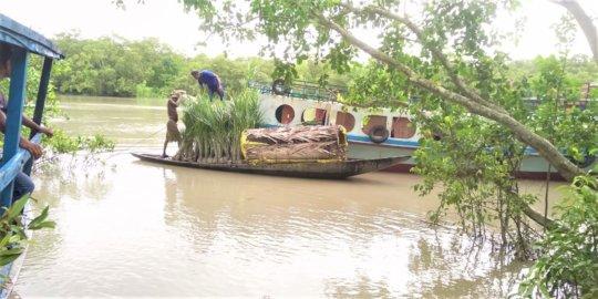Mangrove saplings increase family income