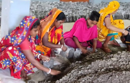 Soil preparation and polybag filling