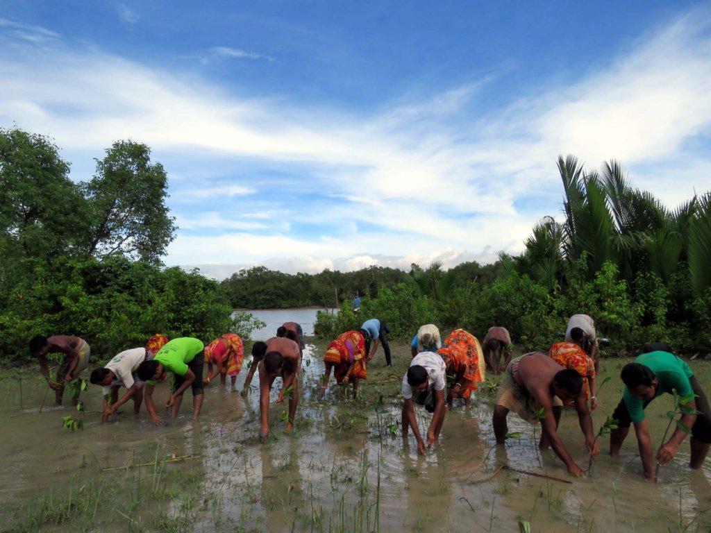 Mangrove Plantation for Coastal Protection