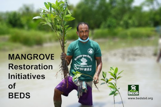 Mangrove Plantation for Coastal Protection