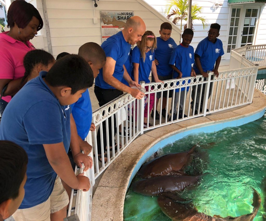Boca Raton Program observing nurse sharks