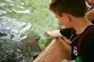 Feeding a stingray