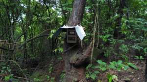 Camera trap set up in the Pangolin habitat