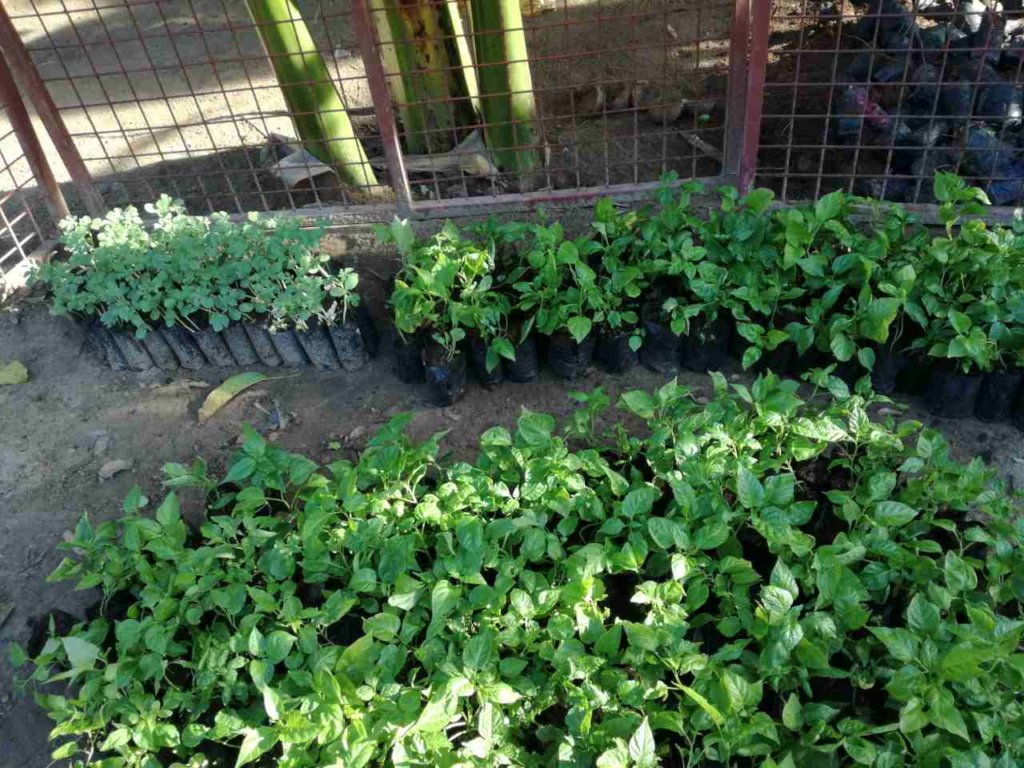 Integrated Farming Project