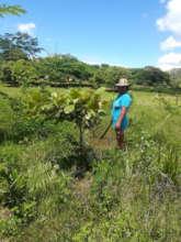 Campesinos que cuidan los arboles