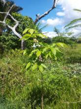 Arboles que crecen fuertes y sanos