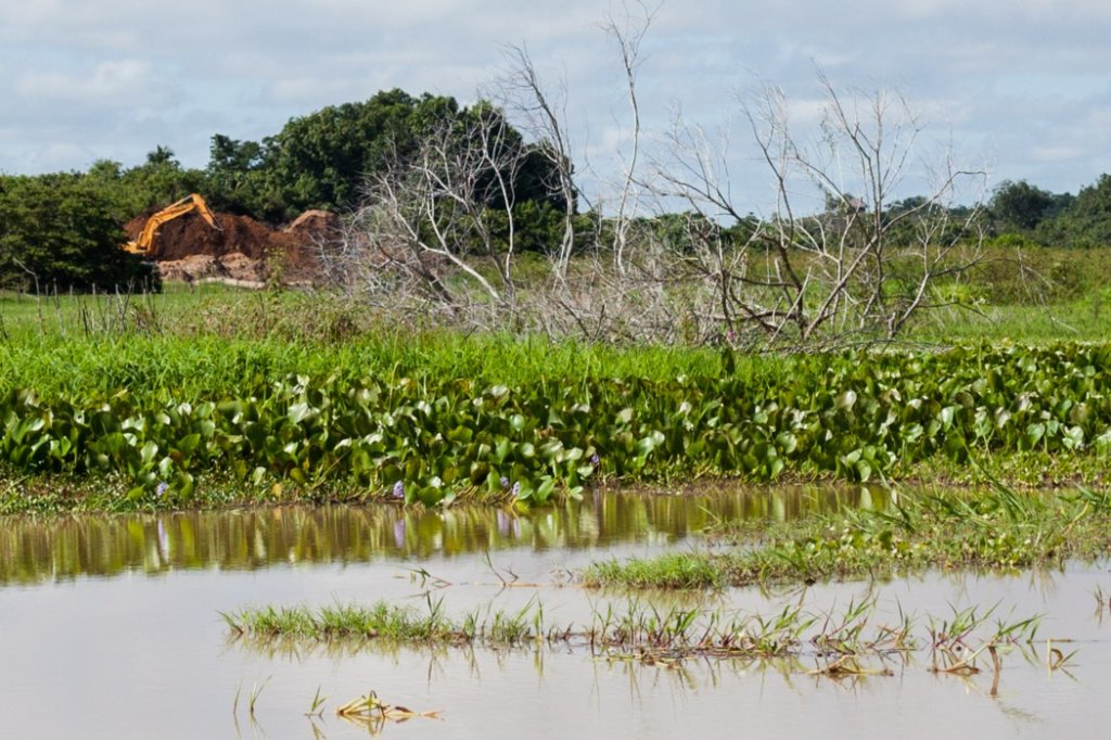 Restoring Ayapel swamp planting together