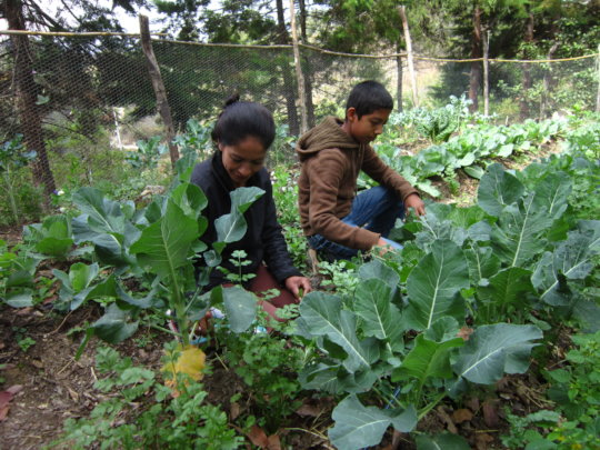 A family working on family organic garden