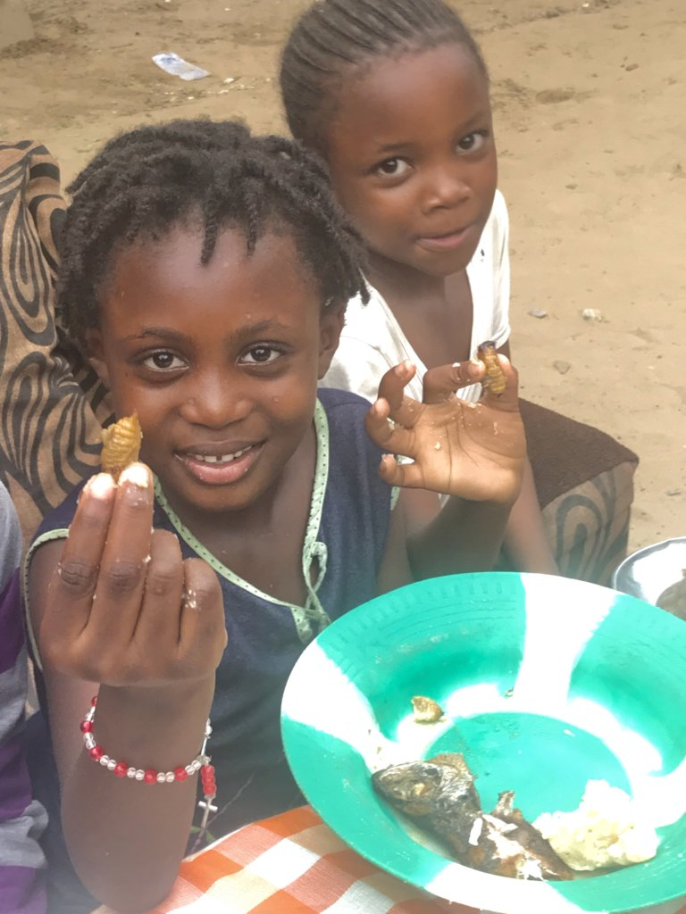 Feed DR Congo's Orphans through Insect Farming