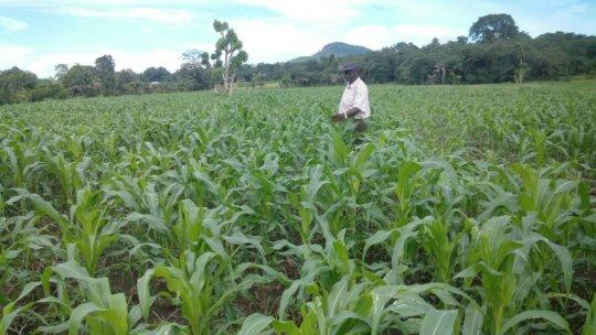 Mr. Kamara, program manager, inspecting the fields