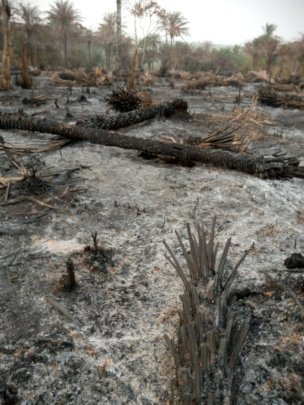 Rural bush, burned for rice cropping, febr 2021