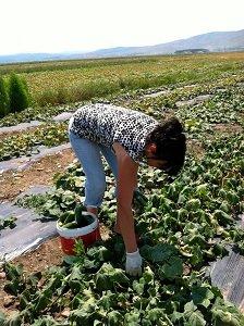 Valbona in her field