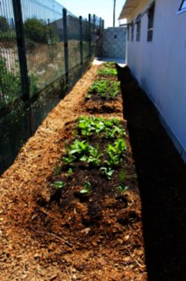 Abaphumeleli's vegetable garden