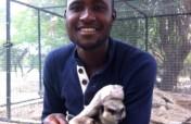 Watch Our Meerkats Grow