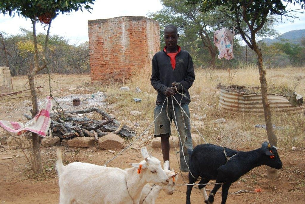 A boy and his goats