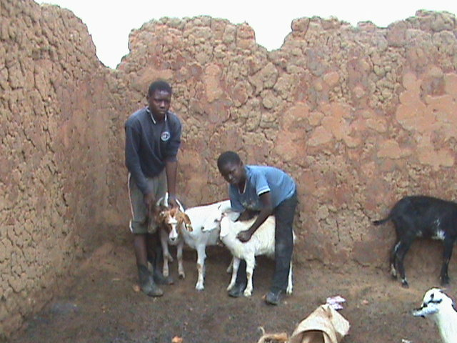 Gabriel and Gibon with goats
