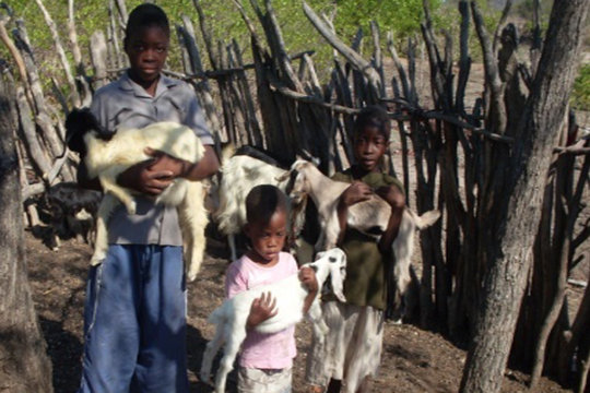 Cuthbert, siblings and goats