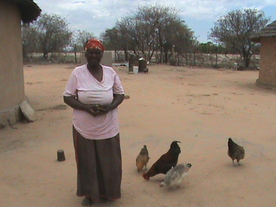 grace and the chickens