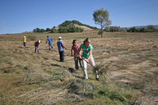 Tossing hay