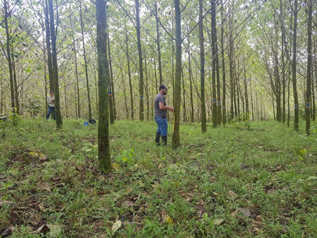 Measuring tree growth,