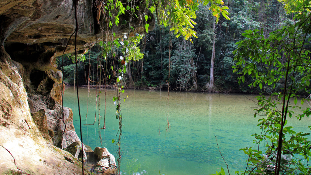 Help Rangers Protect Forests in Southern Belize