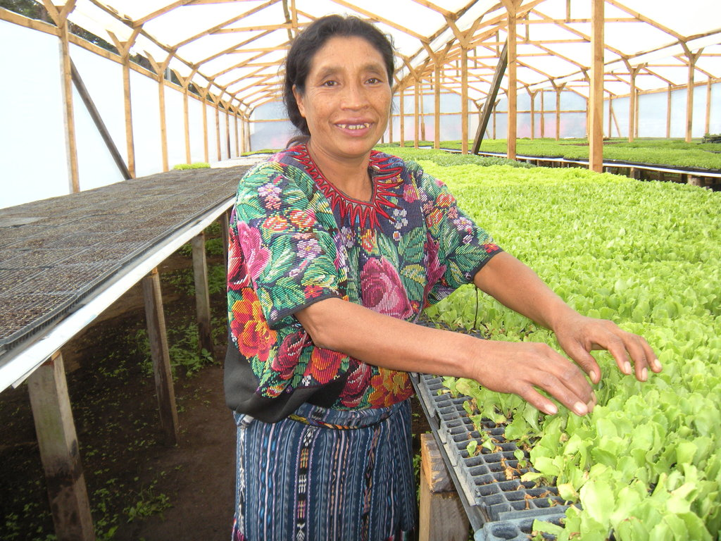 Improve Diet of 20 Guatemalan  Families