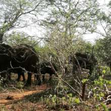 Our first elephant herd