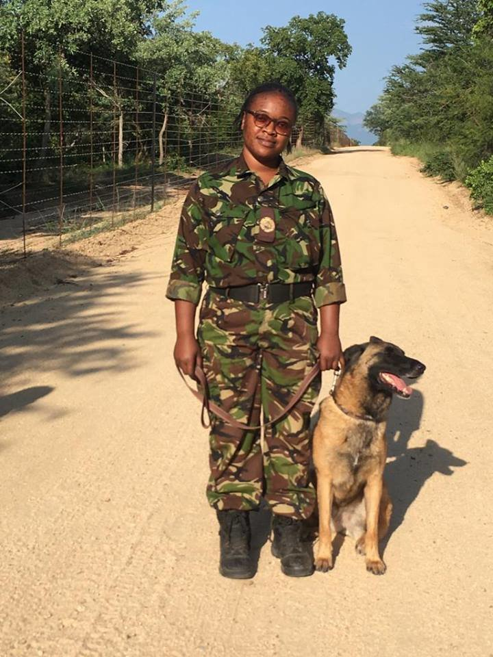 Belgian Malinois dog with an elite Mamba