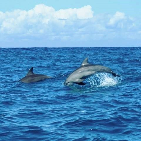 Ethical Dolphin Tour Workshops and Conservation