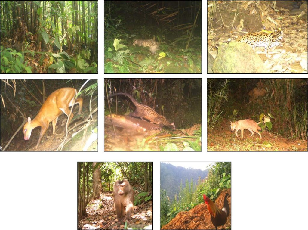 Camera trap images of the biodiveristy in Dampa