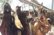 Stop the Hunting of Wildlife in India