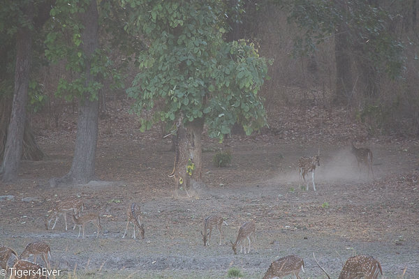Mist and fog make it difficult to see wildlife