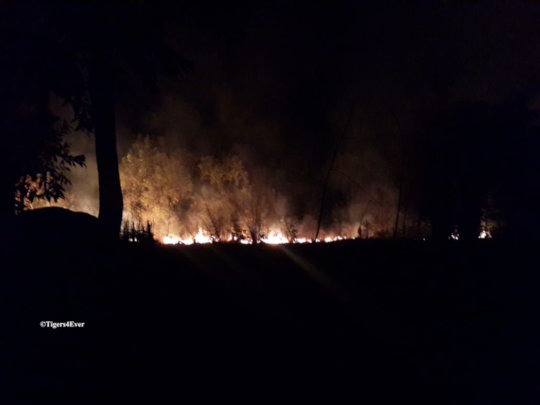 Our Patrols discover a raging forest fire at night
