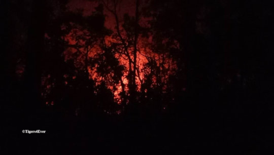 Forest Fires Rage on