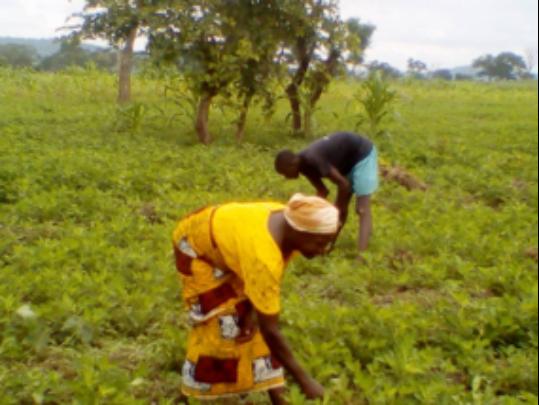 Naomi working on her farmland