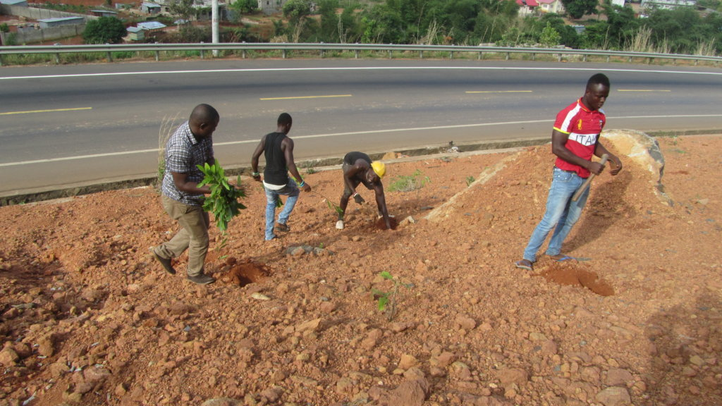 Plant Trees to Reverse Deforestation in Africa