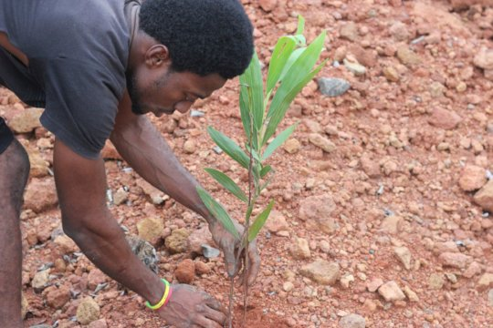Help Plant Trees to Reverse Deforestation