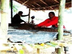 Kanai Village- vermi composting after