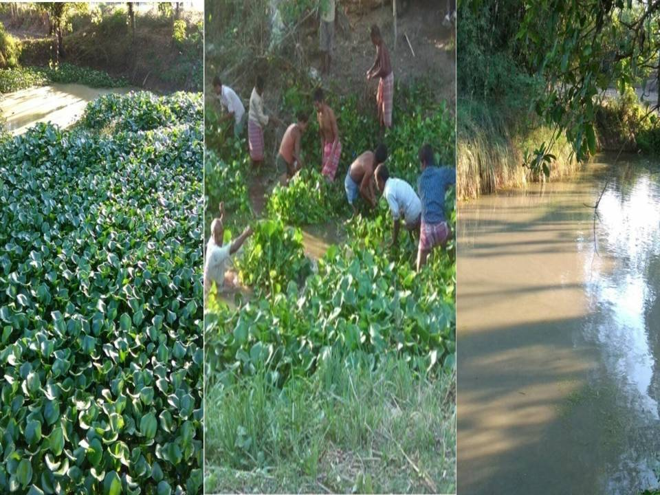 village Dhulkumari (Pond Cleaning ) before& after
